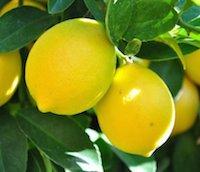 Christina_Dodd_Lemons