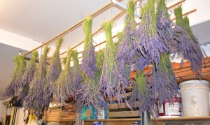 Christina_Dodd_Drying_Lavender